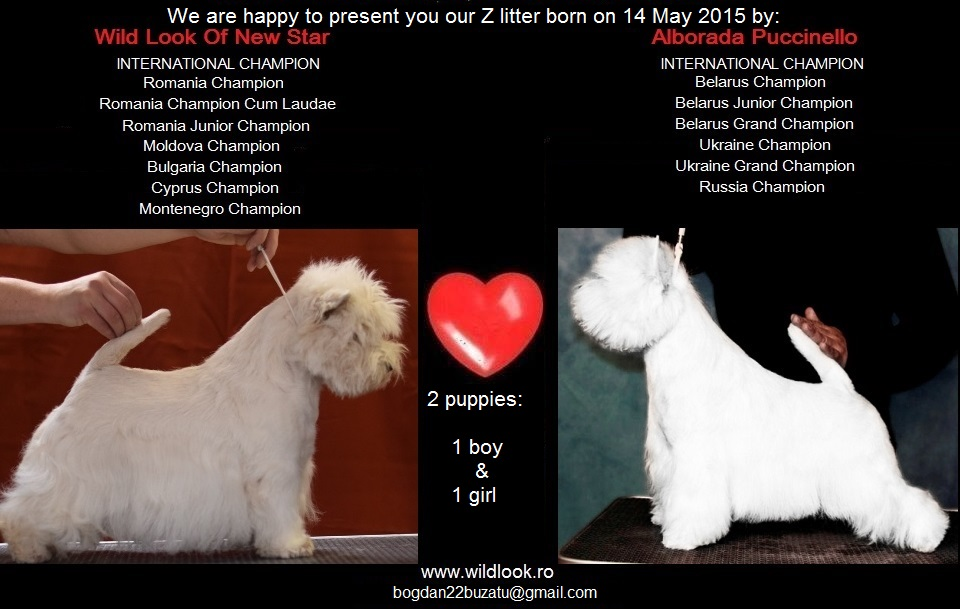 izy_pucci litter-puppy2