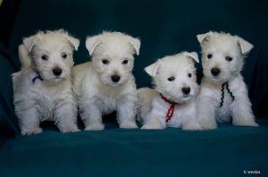 puppymika6w-res